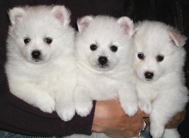 Pups 3, 2 and 1
